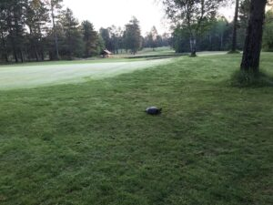 Golf Up North NMU Golf Course Turtle on the Course